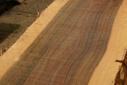 EUCALYPTUS WOOD FOR OUTDOOR FURNITURE